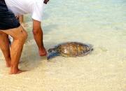 Handfeeding-wild-turtle-Old